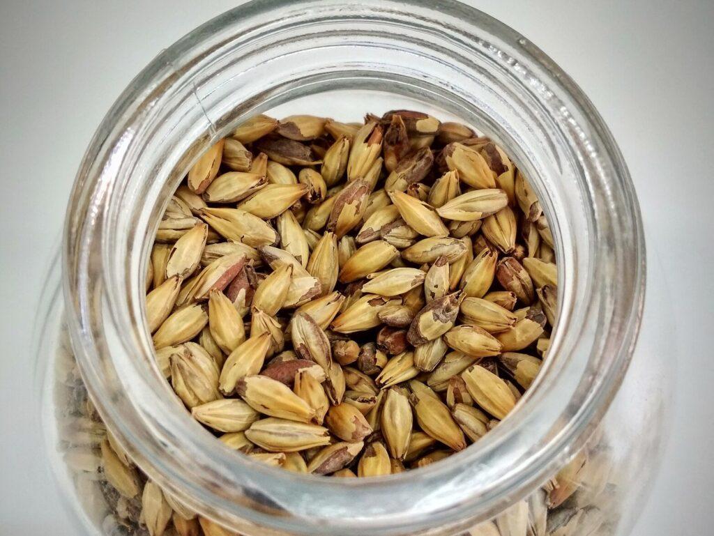 wheat for rejuvelac